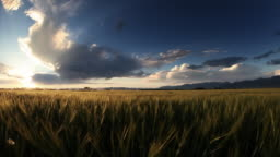 Storm with glowing wheat