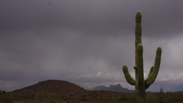 tl stormclouds and rain drift over desert, usa - cactus stock videos & royalty-free footage