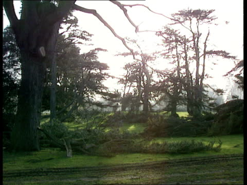 kingston lacy damage; **** rushes not kept england: dorset: kingston lacy gv country area with fallen trees l-r ditto more mcginty and harry cherrett... - pinaceae stock videos & royalty-free footage