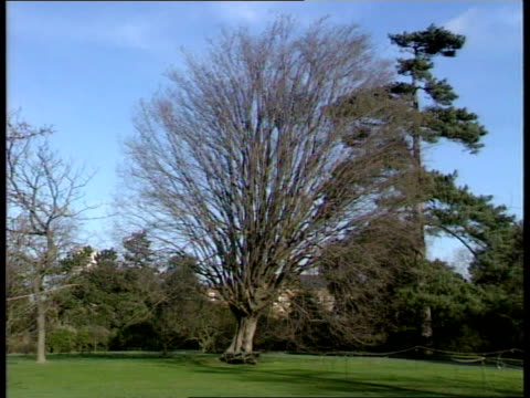 power restoration/damage; b)nao: kew gardens: uprooted trees; 200 yr old tree leaning over; intvw prof ghillean prance - it is a terrific... - b rolle stock-videos und b-roll-filmmaterial