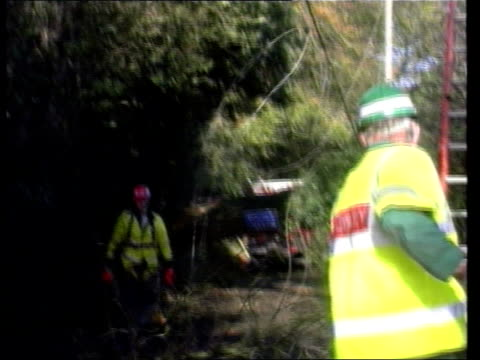 la ms tree branch falling down from electric cable tilt down to men la ms man up telegraph pole - itv news at ten stock-videos und b-roll-filmmaterial