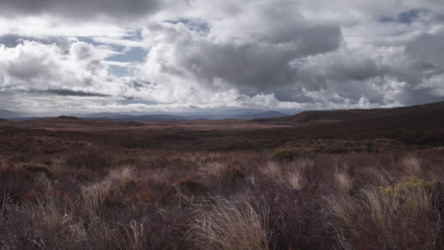 t/l, ws, stormy clouds above field of tussock grass, tongariro national park, north island, new zealand - north island new zealand stock videos & royalty-free footage
