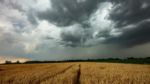 t/l nuvole tempestose che scorrono su campi di grano e mais - storm cloud video stock e b–roll