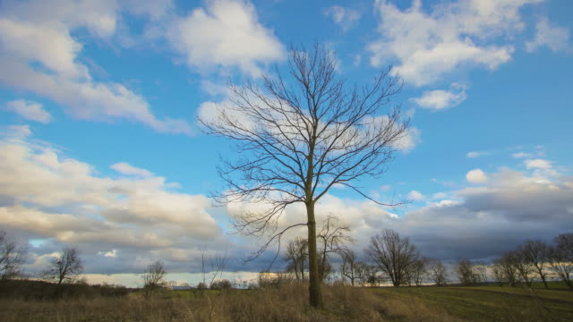 ビッグ嵐の雲の木、太陽の下で輝く - 半透明点の映像素材/bロール
