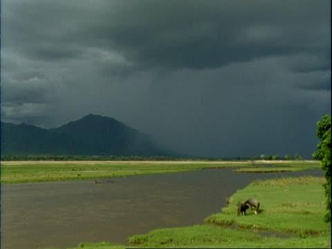 wa stormy skies over mountains and river, buffalo grazing on river bank, mana pools, mana pools, zimbabwe - zimbabwe stock videos and b-roll footage