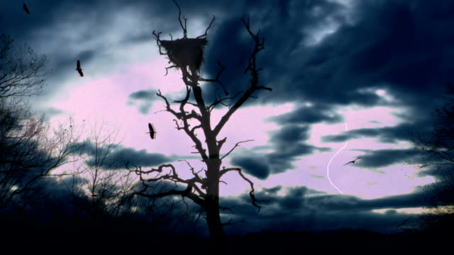 stormy  tree - bird's nest stock videos & royalty-free footage