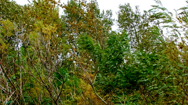stormy trees and wind columbia river gorge oregon 87 - columbia river gorge stock videos & royalty-free footage