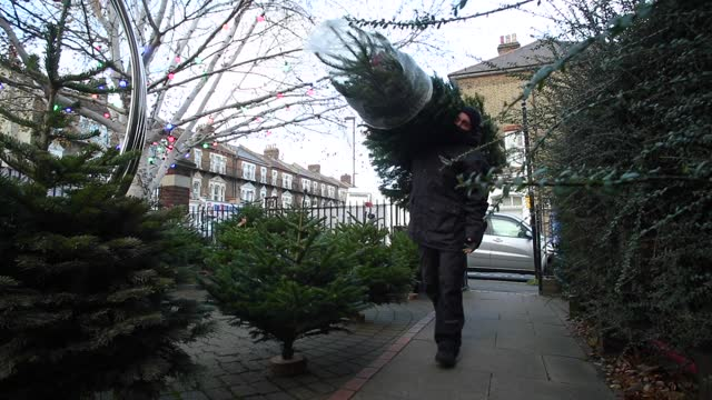 johnny davis and louise washford have been running their family business 'clickmas trees' for 13 years. they supply nordmann fir trees to customers... - produced segment stock videos & royalty-free footage