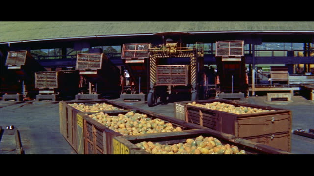 ms straddle truck picks up trailer load of pineapples / honolulu, hawaii, united states - tropical fruit stock videos & royalty-free footage