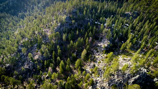 straight down drone angle above forest - californian sierra nevada stock videos & royalty-free footage