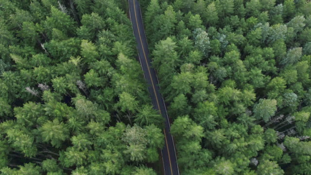 straight down: road surrounded by tall trees - overhead view stock videos & royalty-free footage