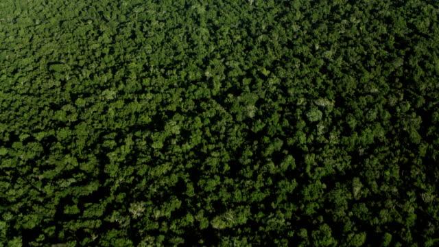 vidéos et rushes de straight down shot of yucatan forest - vue en plongée verticale