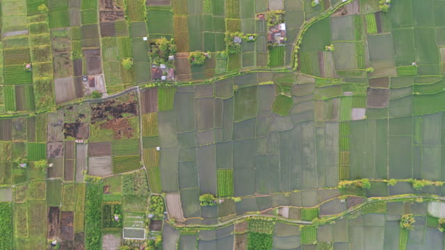 straight-down schuss hoch oben reisfelder - rice paddy stock-videos und b-roll-filmmaterial