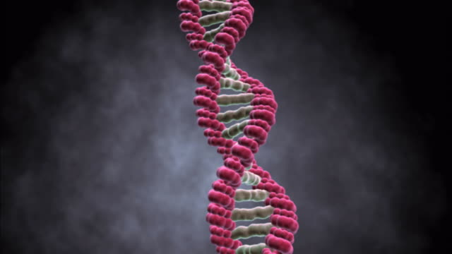 a strand of dna unwinds and displays its base components. - dna video stock e b–roll