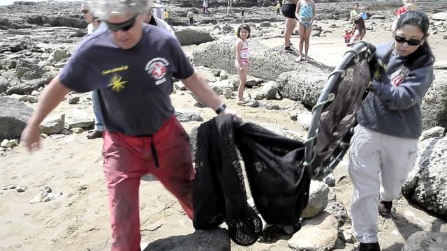 vídeos de stock e filmes b-roll de stranded seal lions rescued in southern california on april 05, 2013 in los angeles, california stranded seal lions rescued in southern california on... - leão marinho