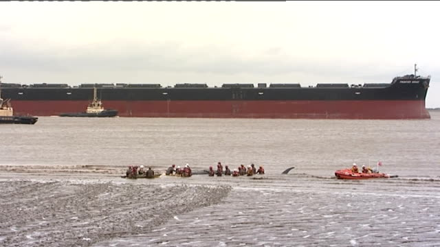 stranded whale freed from lincolnshire coast mud flat england lincolnshire immingham docks ext various of rescue workers standing in shallows helping... - aquatic organism stock videos & royalty-free footage