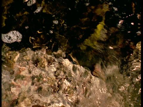 strands of kelp swirl in a tidal pool. - kelp stock-videos und b-roll-filmmaterial