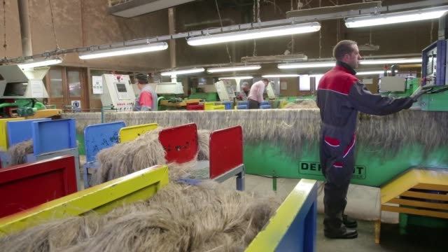 Strands of linen straw pass along conveyors during quality checks inside the factory at the Cooperative Teillage du Neubourg in CrosvillelaVieille...