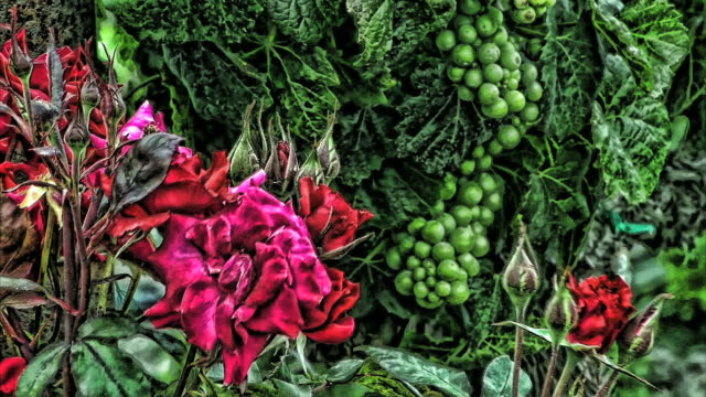 strange red roses and green grapes in a breeze. - digital enhancement stock videos and b-roll footage