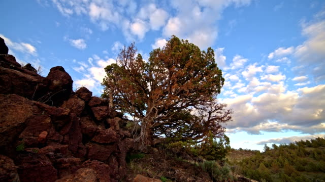 Strange rocks and juniper interesting tree under blue sky and puffy clouds in the desert sunset with sagebrush South Steens Mountain near Malheur National Wildlife Refuge