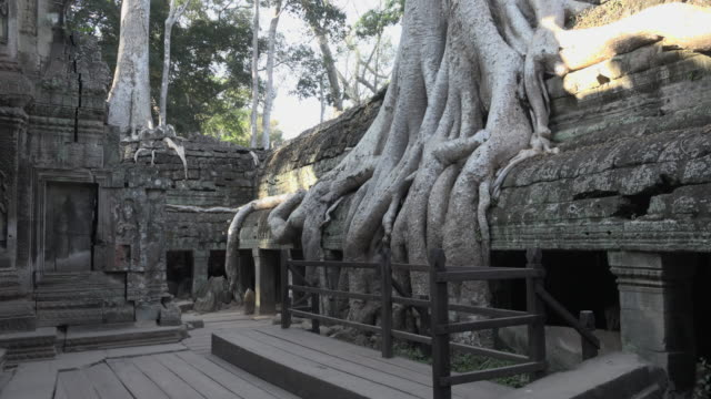 TD / Strangler fig tree roots growing over Ta Prohm temple