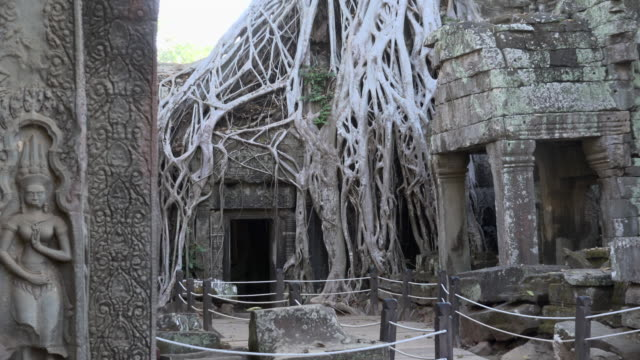 ZO / Strangler fig tree roots growing over Ta Prohm temple with Apsara relief