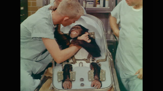 vídeos y material grabado en eventos de stock de strapped into a capsule-like chair, a chimpanzee has its teeth examined by a technician while putting his hands down the technician's shirt. still... - chimpancé