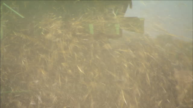 straw and chaff from wheat blow out of the back of a combine. - cereal plant stock videos & royalty-free footage