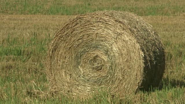 a straw bale in field, hokkaido, japan - fieno video stock e b–roll