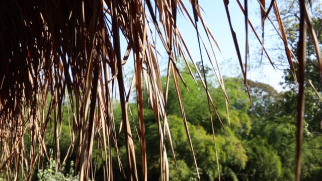 straw roof in forest - strohdach stock-videos und b-roll-filmmaterial