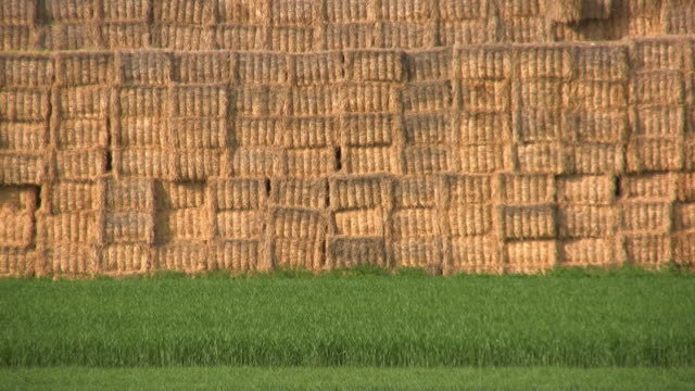 hd: straw - hay texture stock videos & royalty-free footage