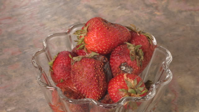 t/l strawberries decaying - fungal mold stock videos & royalty-free footage