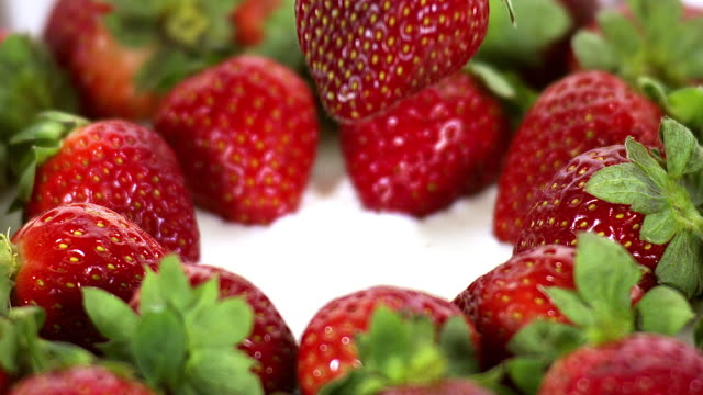 Strawberries, fragaria vesca, Fruit falling into Cream, Slow Motion