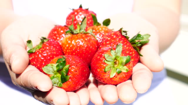 Strawberries on woman hand , 4k(UHD)