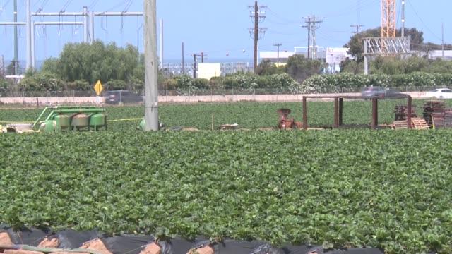 stockvideo's en b-roll-footage met kswb strawberry field in carlsbad - carlsbad californië