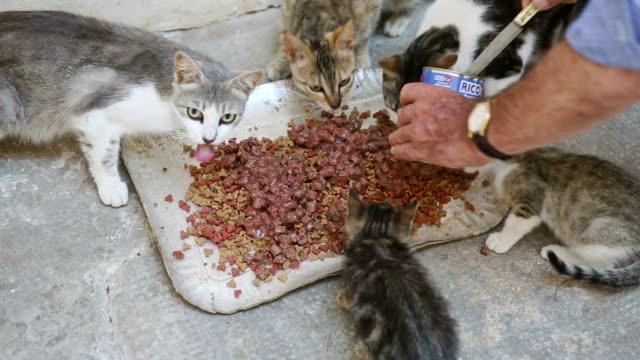 遊離猫と女性フィーディングゼム - 迷子の動物点の映像素材/bロール