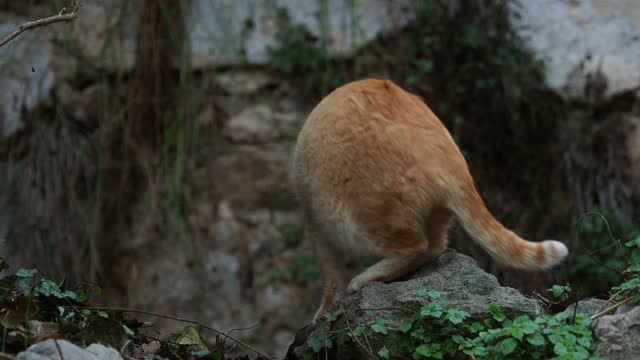stray cat climbing on the ruins of an abandoned house. - sideways glance stock videos & royalty-free footage