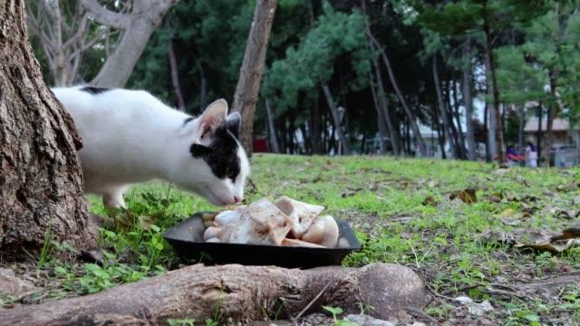 Stray cat eating at park