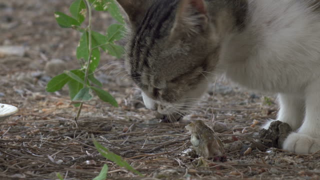 a stray cat eating fish close-up - rock formation stock videos & royalty-free footage