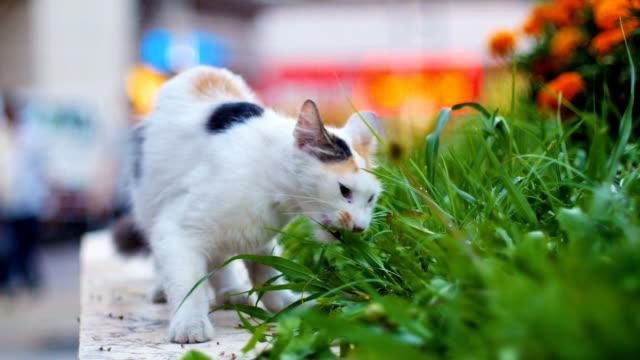 Streunende Katze Essen grass