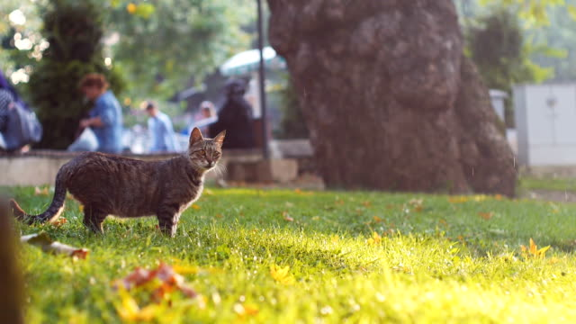 Stray cat from Istanbul streets