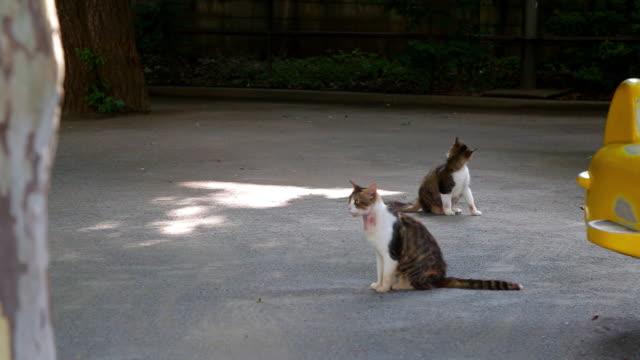 stray cat on street / tokyo, japan - 雑種のネコ点の映像素材/bロール