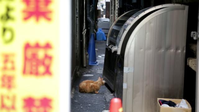 stray cat on street / tokyo, japan - 路地点の映像素材/bロール