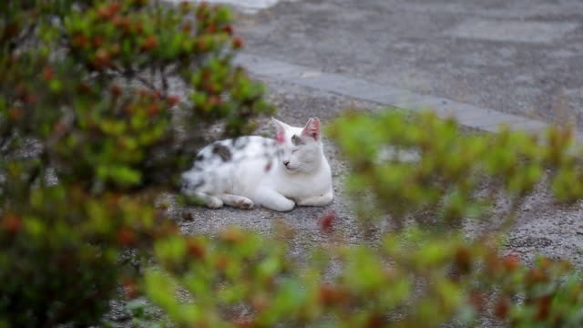 stray cat snoozing on street / tokyo, japan - 雑種のネコ点の映像素材/bロール