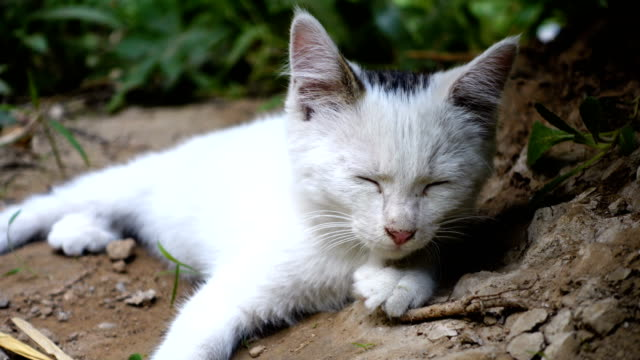 stray cat - homeless shelter stock videos and b-roll footage