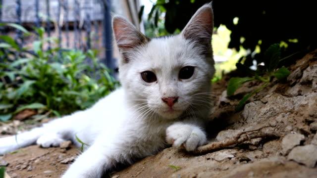 stray cat - stray animal stock videos & royalty-free footage