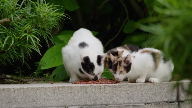 stray cats on the streets of kuala lumpur - malaysia stock videos and b-roll footage
