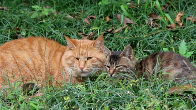 zwerfkatten rusten in het gras
