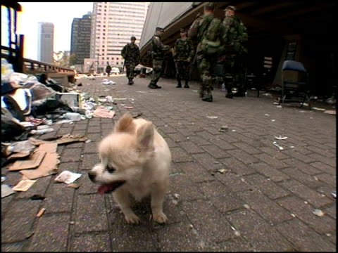stray dog and nation guard troops in streets after hurricane katrina - 2005 stock videos & royalty-free footage