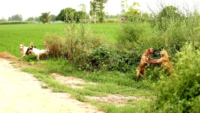 Streunender Hund Kampf